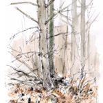 Le faisan - feutre et aquarelle