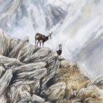 Les chamois - Aquarelle - 30x20 - A0168