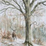 Le cerf et le hêtre - Aquarelle - 60x40 - A2614