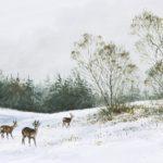 Chevreuils dans la neige - Gouache - 20x30 - G1834