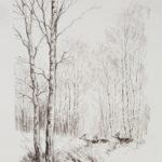 Cerf et biches dans les bouleaux - Craie bistre - 40x30 - S3269