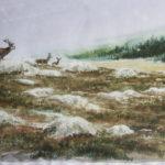 Brame sur le Mont Lozère - Aquarelle