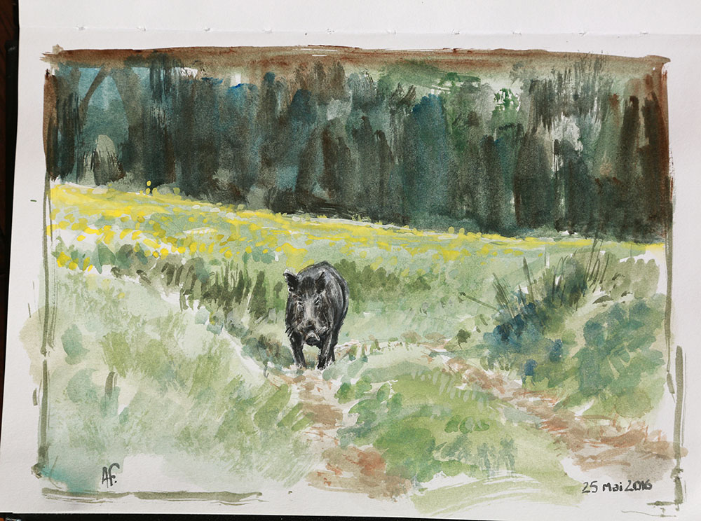 C5229_sanglier_Freminet_animalier