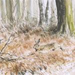 Lièvre des bois - Gouache - 20x30 - G1935