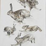 Etude de lièvre - Crayons Conté - 40x30 - D1561