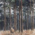 Le cerf sous les pins - Gouache - 60x40 - G0178