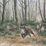 Sangliers dans les ronces - Aquarelle - 42x57 - A0689