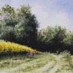 Chevreuils dans les colzas - Aquarelle - 20x26 - A1315