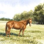 Cheval au pré - Aquarelle - 27x37 - A6853