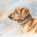 Golden Retriever - Aquarelle - 18x25 - A7524