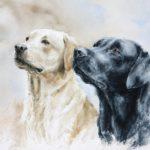 Labradors - Aquarelle - 25x33 - a7625