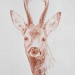 Brocard - Crayon sanguine - 30x20 - s6097