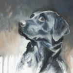 Labrador - Gouache - 20x30 - A5705