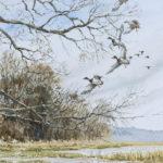 Pose de canards - Aquarelle - 30x20 - A8623