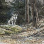 Le loup sur son rocher - Gouache - 20x30 - G3170