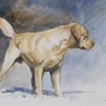 Labrador - Aquarelle - 20x30 - A4934