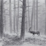 Cerf dans la brume - Fusain - 29x39 - D6825