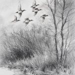Vol de canards - Fusain et pastel - 31x21 - D8991