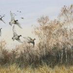 Pose de canards - Aquarelle - 20x30 - A9735
