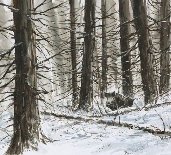 Sanglier dans la neige - Aquarelle - 20x30 - A1231