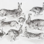 Etude de lièvres - Fusain - 40x60 - D2934