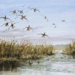 Pose de canards - Gouache - 27x37 - AG2901