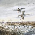 Pose de canards - Aquarelle - 20x30 - A8361