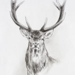 Etude de cerf - Crayons pastel - 27x17 - D9516
