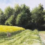 Chevreuil et colza - Gouache - 20x30 - G0149