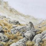 Loup en montagne - Aquarelle - 20x30 - G2320